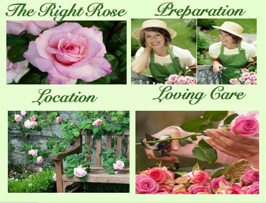 Rosebg2